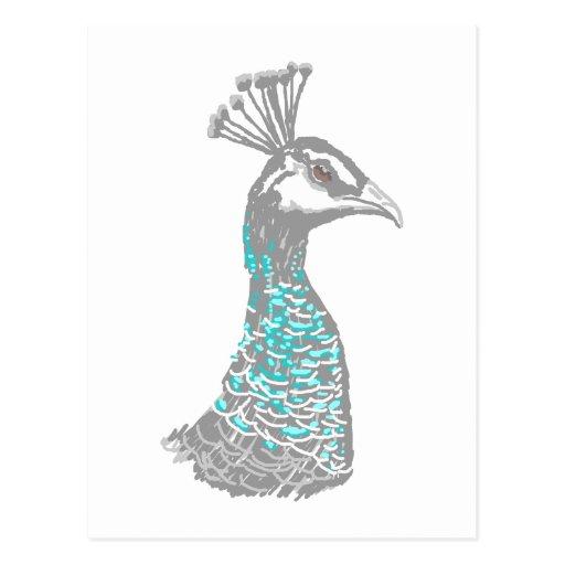 Peahen Bird. Postcard