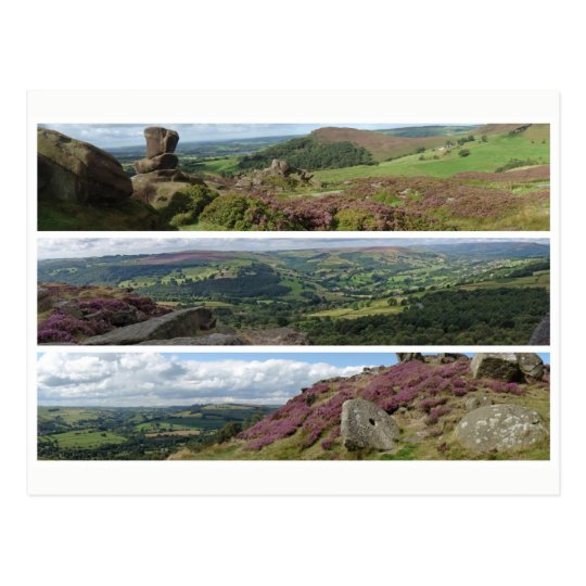 Peak District heather panoramas Postcard