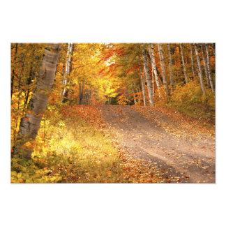 Peak Fall Foliage Season in the U. P. Photo Print