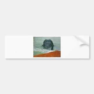Peanut in the water car bumper sticker