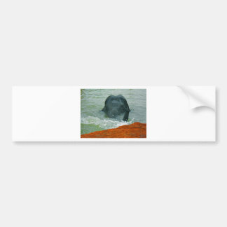 Peanut in the water bumper sticker