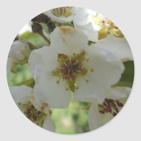 Pear blossoms stickers