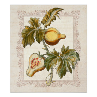 Pear Fruited Solanum Country Kitchen Decor Poster