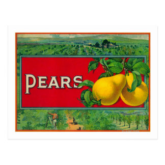 Pear Stock Crate Label Postcard