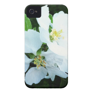 Pear tree flower iPhone 4 Case-Mate case