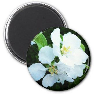 Pear tree flower magnet