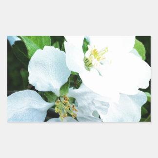 Pear tree flower rectangular sticker