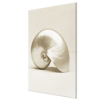 Pearlised nautilus sea shell canvas print