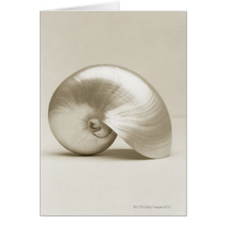 Pearlised nautilus sea shell card