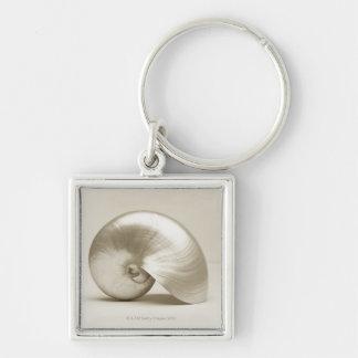 Pearlised nautilus sea shell key ring