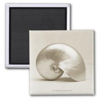 Pearlised nautilus sea shell magnet