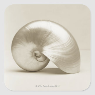 Pearlised nautilus sea shell square sticker