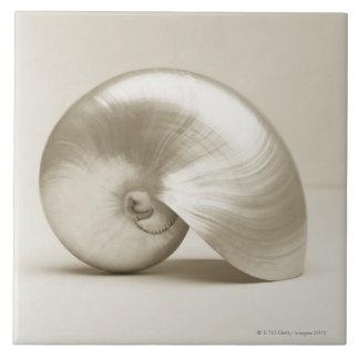 Pearlised nautilus sea shell tile