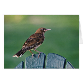 Pearly-eyed Thrasher (Puerto Rico) Card