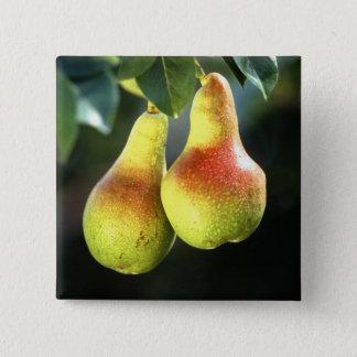 Pears 15 Cm Square Badge
