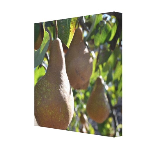 Pears on a Tree Canvas Print
