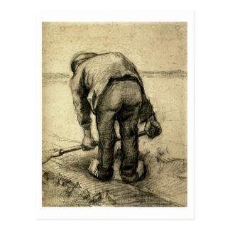 Peasant Lifting Beet, Vincent van Gogh Post Cards