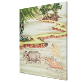 Peasant working in the paddy fields canvas print