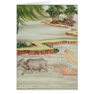 Peasant working in the paddy fields card