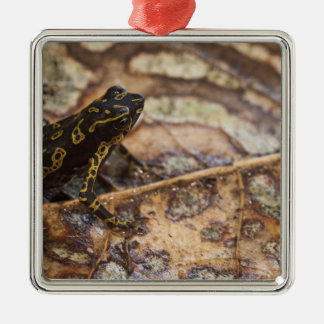 Pebas Stubfoot Toad Atelopus spumarius) Silver-Colored Square Decoration