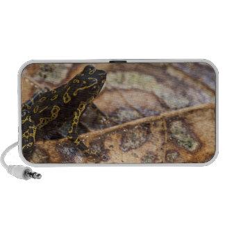 Pebas Stubfoot Toad Atelopus spumarius) Speaker