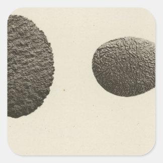 Pebbles carved by sand, Colorado River Square Sticker