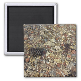 Pebbles in Taylor Creek Magnet
