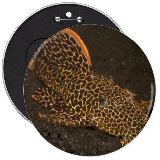 Peckoltia Compta 6 Cm Round Badge