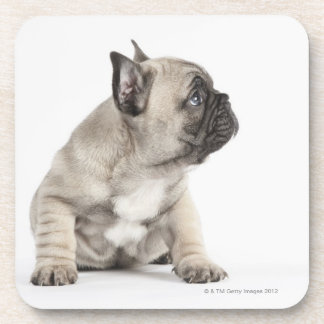 Pedigree puppy coaster