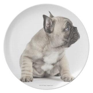 Pedigree puppy plate