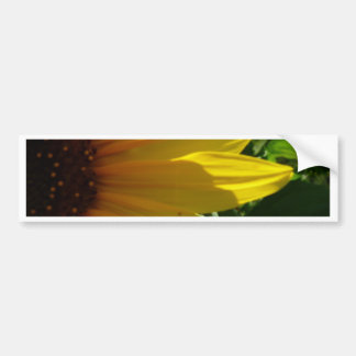 peek-a-boo bumper sticker