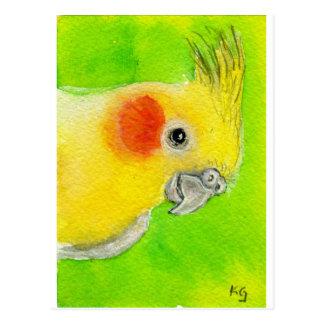Peek-a-boo Cockatiel Postcard