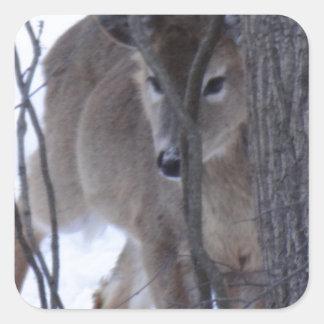 peek-a-boo deer. square sticker