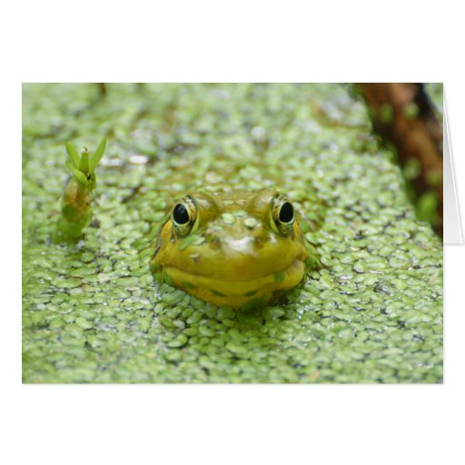 Peek-a-boo frog greeting card