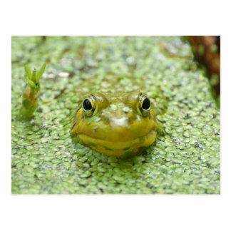 Peek-a-boo frog post card