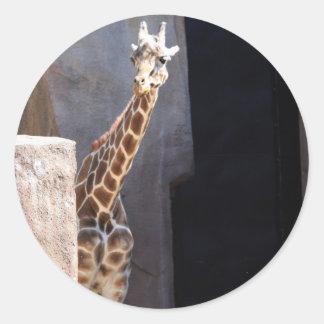 Peek-a-boo giraffe round sticker