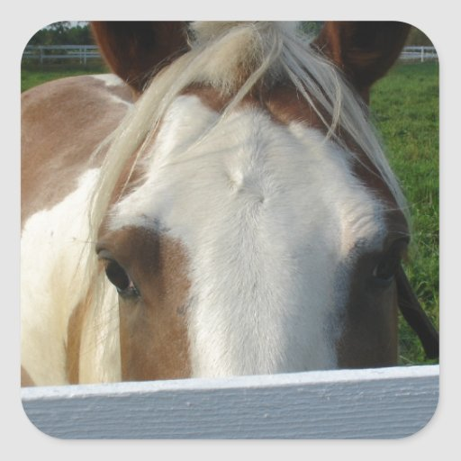 Peek a Boo Horse Square Stickers