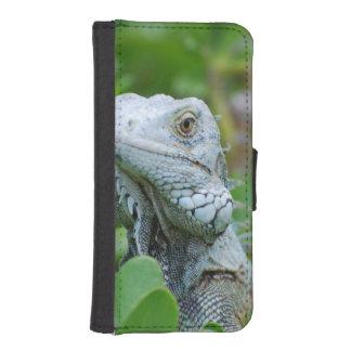 Peek-a-boo Iguana