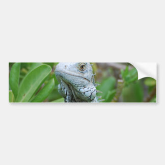 Peek-a-boo Iguana Bumper Sticker
