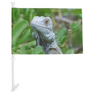 Peek-a-boo Iguana Car Flag