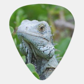 Peek-a-boo Iguana Plectrum