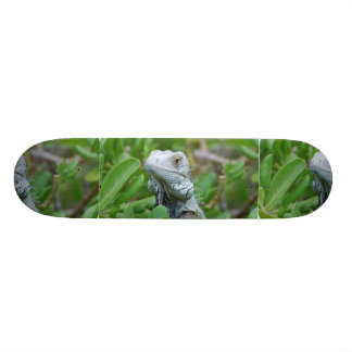 Peek-a-boo Iguana Skate Board