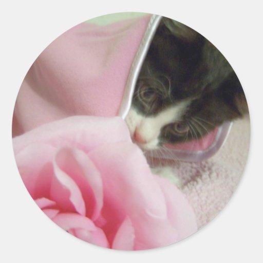 peek a boo kitten sticker