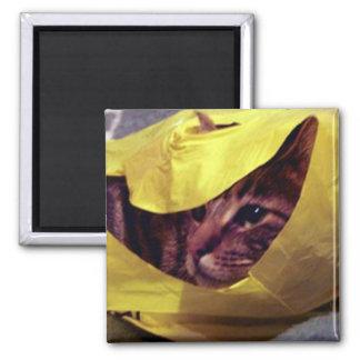 Peek-a-boo Kitty Magnet