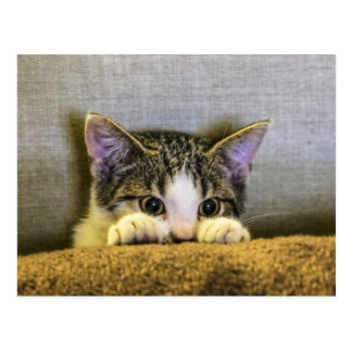 Peek a boo Kitty Postcard