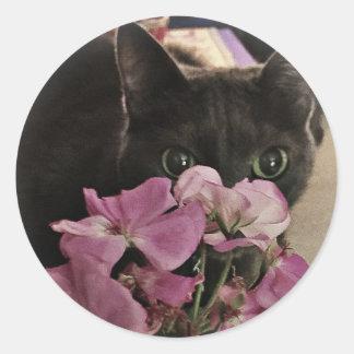 Peek-a-Boo Kitty Stickers