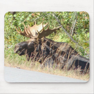Peek-a-Boo Moose Mousepad