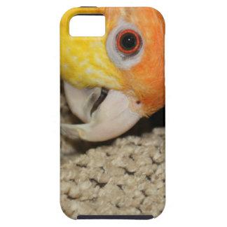 Peek-a-Boo Parrot Caique iPhone 5 Cases