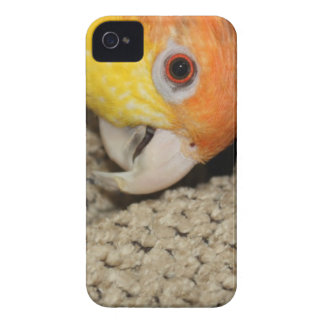 Peek-a-Boo Parrot Caique iPhone 4 Cover