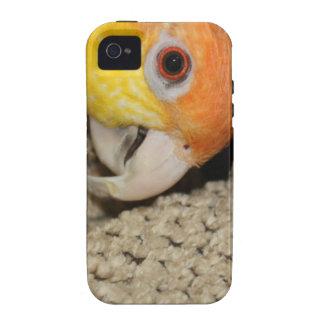 Peek-a-Boo Parrot Caique Case-Mate iPhone 4 Cases